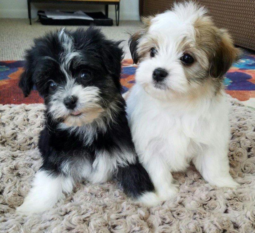 Hannah and Daisy