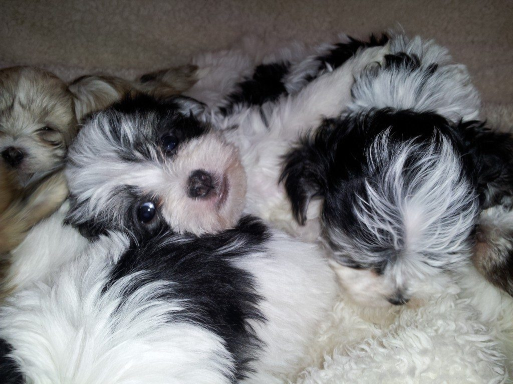 Molly's Twin Boys are Still Available