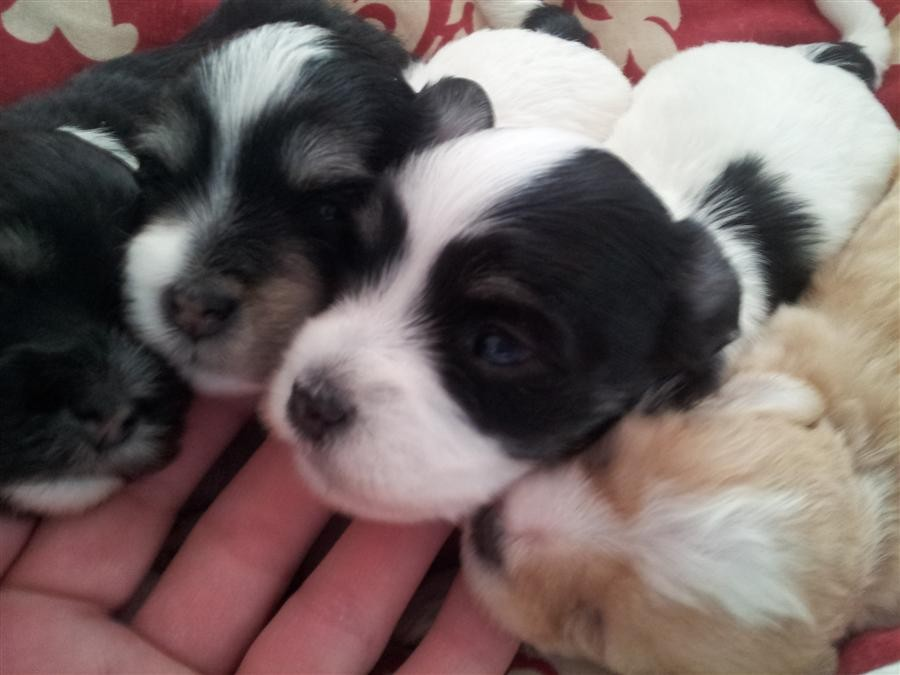 Lucy Puppies 2013 (3)
