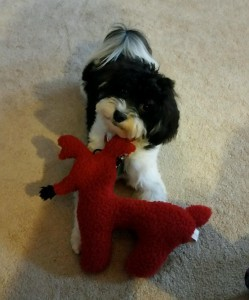 Raphie with Rudolph the Black Nose