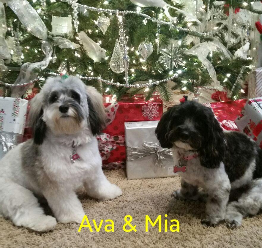 Ava & Mia love their furever family.