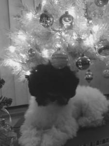 Duke Ruger Dismond loves Christmas