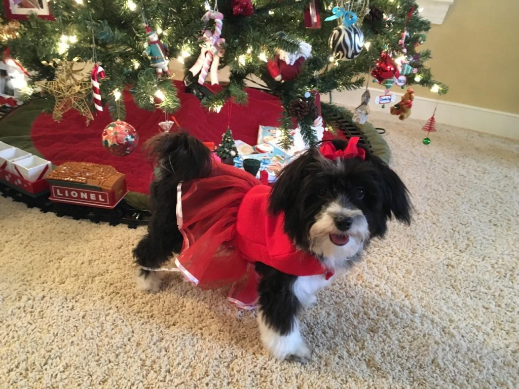 Chloe wishing everyone a nice Christmas.