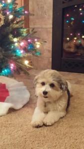 Eli waiting for Santa!