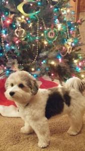 Eli loves Christmas!