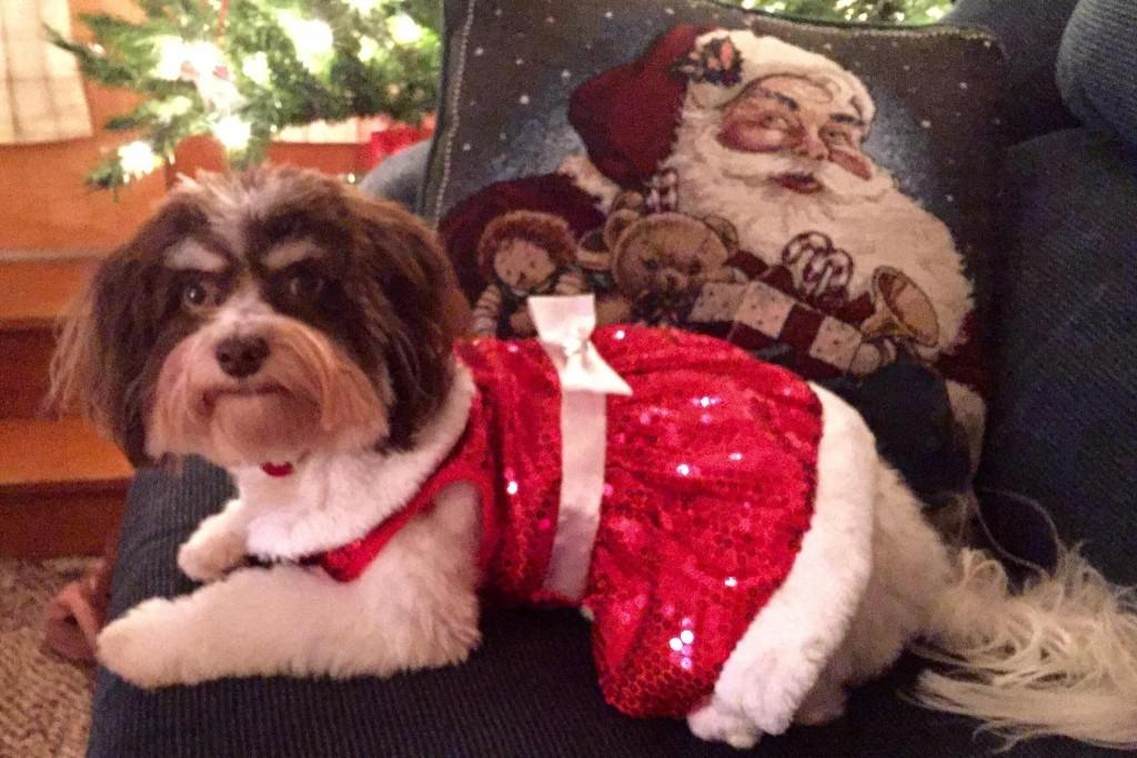 Willa says Happy Holidays!