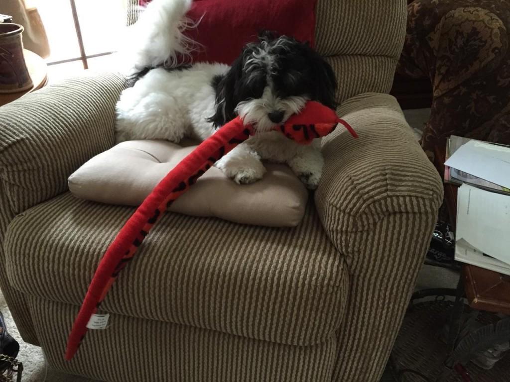 Buddy loves Christmas!