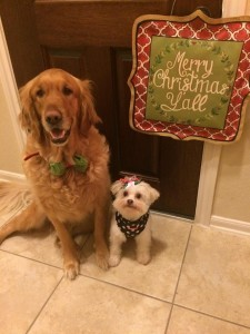 Champ & Zoey wishing Ya'll Merry Christmas!