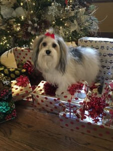 Merry Christmas from Lola Lyngass & family