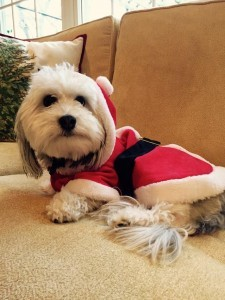 Copa is Santa's lil helper and sends you Happy Wishes.