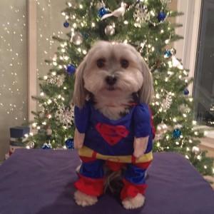Koda all ready for Santa!