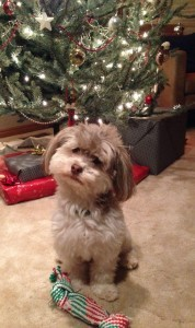 Jeeter is waiting for Santa.  He says Merry Christmas!