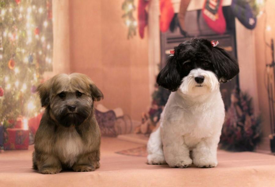 Louie & Chloe all ready for Christmas