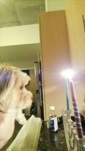 Milo celebrates Hanukkah.  He especially loves the candles.