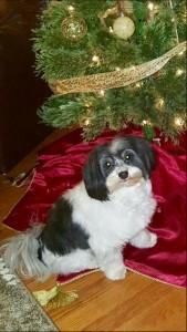 Tumbleweed says Merry Christmas to all!