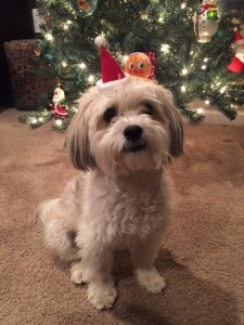 Bella waiting for Santa